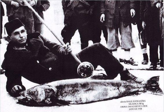 Halil Sofradzija - 1938. godina  januar - Dragojevića buk